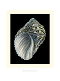 Treasures of the Sea III Giclee Print by Pierre-Joseph Redout&#233;