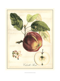Tuscan Fruits I Giclee Print by Vision Studio