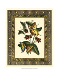 Leather Framed Butterflies I Print by Deborah Bookman