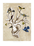 The Ornithologist&#39;s Dream II Giclee Print by Naomi McCavitt