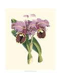 Magnificent Orchid II Plakat af  Vision Studio
