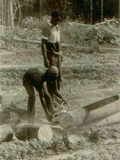 Clearing Rain Forest to Create Fields in Jonestown Photo