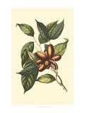 Flourishing Foliage II Poster by  Vision Studio