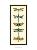 Dragonfly Collector II Poster by Chariklia Zarris