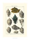 Dezallier - Seaside Treasures II - Sanat