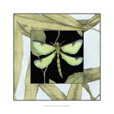 Dragonfly Inset IV Poster by Jennifer Goldberger