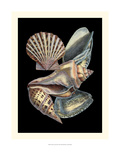 Treasures of the Sea II Giclee Print by Pierre-Joseph Redouté