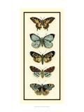 Chariklia Zarris - Butterfly Collector VI - Reprodüksiyon