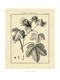 Vintage Botanical Study IV Art by Charles Francois Sellier