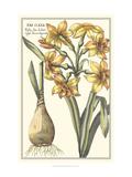 Botanical Beauty IV Posters av  Vision Studio