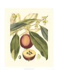 Fantastische Botanik III Kunstdrucke von  Vision Studio