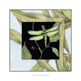 Dragonfly Inset III Prints by Jennifer Goldberger