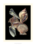 Treasures of the Sea I Prints by Pierre-Joseph Redouté