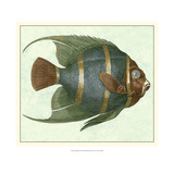 Angel Fish I Giclee Print by Vision Studio