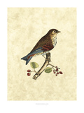 Selby Birds III Prints by John Selby