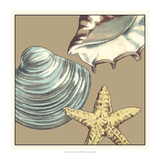 Shell Trio on Khaki IV Prints by Megan Meagher
