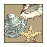 Shell Trio on Khaki IV Prints by Megan Meagher