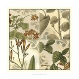 Botanical Quadrant I Poster