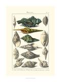 Dezallier - Seaside Treasures I Obrazy