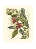 Planche botanique fantastique II Reproduction procédé giclée Premium par Samuel Curtis