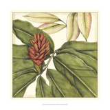 Tropical Blooms and Foliage II Posters af Jennifer Goldberger