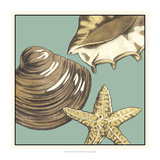 Shell Trio on Blue IV Prints by Megan Meagher