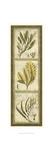 Exotic Seaweed Panel II Poster by Nancy Slocum