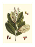 Buchoz Leaves IV Giclee Print by Vision Studio
