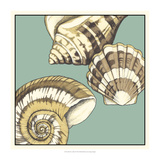 Shell Trio on Blue II Art by Megan Meagher