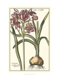 Botanical Beauty I Giclee Print by Vision Studio