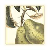 Graphic Pear Kunstdruck von  Vision Studio