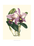 Magnificent Orchid III Prints by  Vision Studio