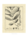 Vintage Botanical Study VI Giclee Print by Sellier 