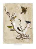 The Ornithologist&#39;s Dream III Giclee Print by Naomi McCavitt