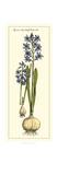 Embellished Hyacinth I Prints by  Vision Studio