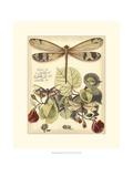 Skurrile LibellenII Kunstdruck von Vision Studio