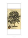 Rustic Tree I Posters by  Vision Studio