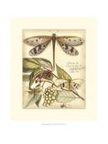 Whimsical Dragonflies I Plakater af  Vision Studio