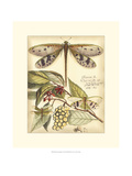 Whimsical Dragonflies I Giclee Print by Vision Studio