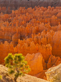 Bryce Canyon National Park, Utah, USA Photographic Print by Cathy & Gordon Illg