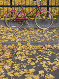 Red Bicycle Rests Against a Fence Amidst Yellow Fallen Leaves, Oregon, USA Photographic Print by Brent Bergherm