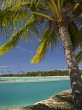 Palm Trees and Lagoon, Musket Cove Island Resort, Malolo Lailai Island, Mamanuca Islands, Fiji Photographic Print by David Wall