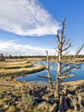 Golf Course View, Bend, Oregon, USA Photographic Print by Tom Norring