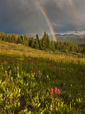Meadow, Shrine Pass, Colorado, USA Photographic Print by Don Grall