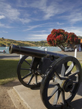 Old Cannon and Pohutukawa Tree, Akaroa, Banks Peninsula, Canterbury, South Island, New Zealand Photographic Print by David Wall