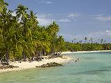 Beach, Palm Trees and Bures, Plantation Island Resort, Malolo Lailai Island, Mamanuca Islands, Fiji Photographic Print by David Wall