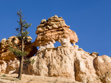 Limestone Formation, Bryce Canyon National Park, Utah, USA Photographic Print by Tom Norring