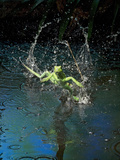 Green Basilisk or Plumed Basilisk Running on Water (Basiliscus Plumifrons), Costa Rica Photographic Print by Andres Morya Hinojosa