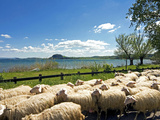 Lake of Bolsena, View from San Magno Area, Viterbo, Latium, Italy Photographic Print by Nico Tondini
