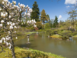 Japanese Gardens Part of Washington Park Arboretum, Seattle, Washington, USA Photographic Print by Trish Drury